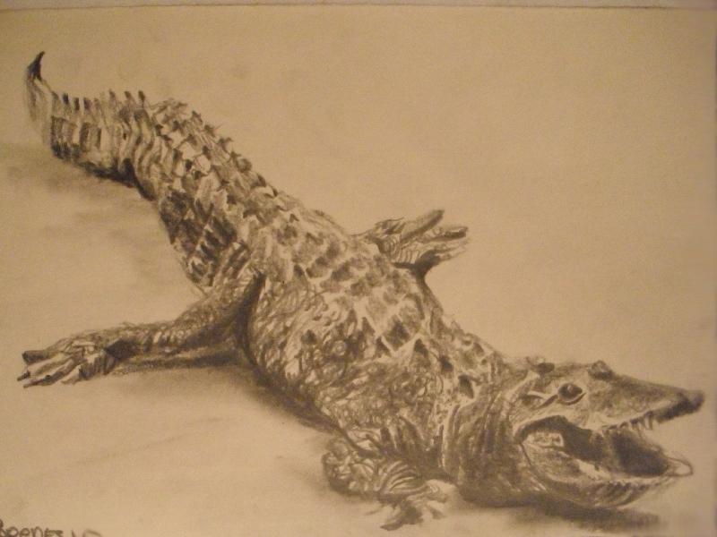 zoo-cocodril
