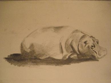 zoo-hipopotam
